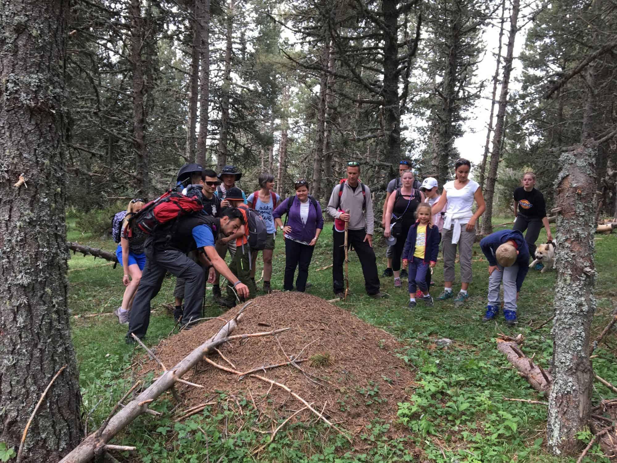 Découverte nature forêt d'Egat