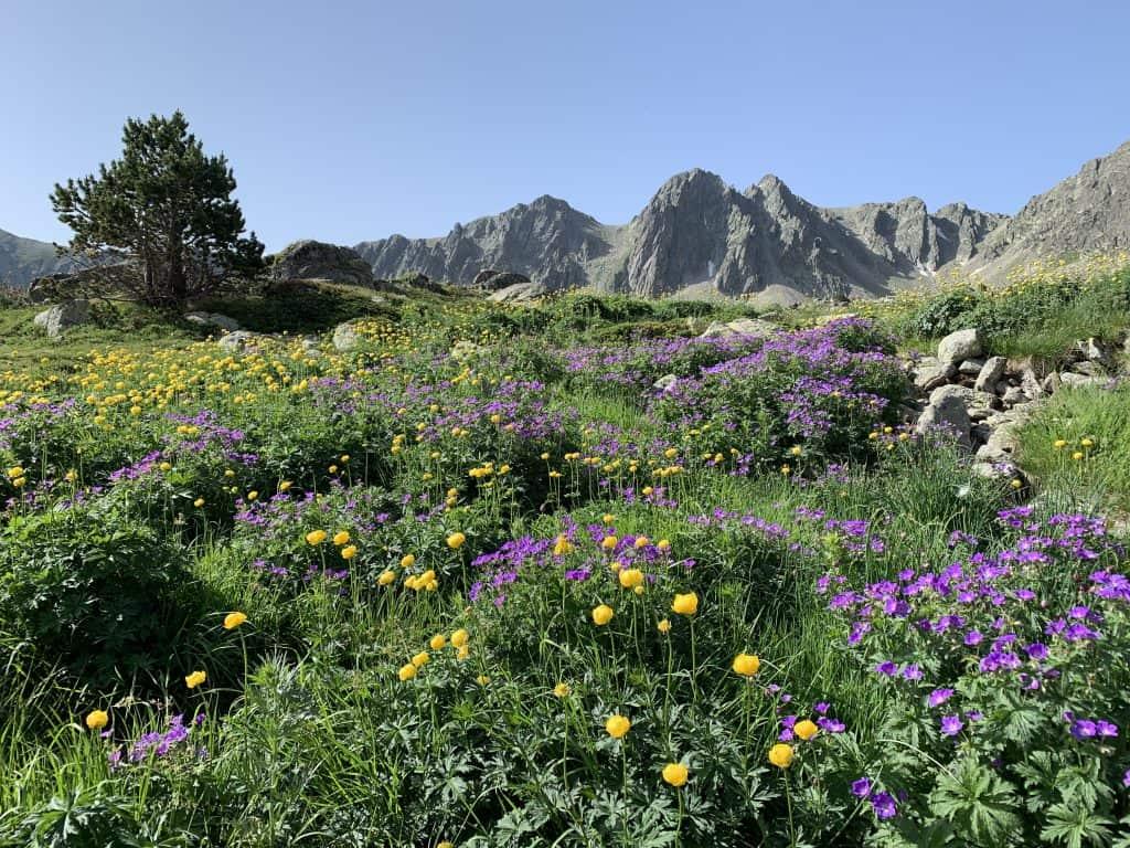 vos activités de randonnée pédestre dans les Pyrénées Orientales avec professionnel de la montagne